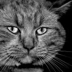 Ketika Kucing Kecil Menjadi Seekor Singa
