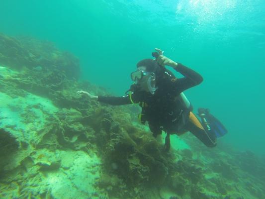 Kembali Menceburkan Diri Ke Laut