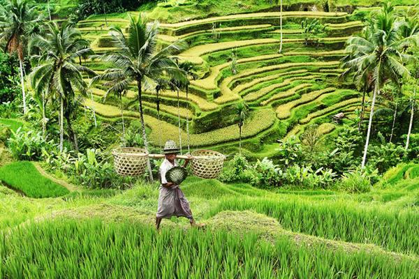 Hijaunya Negeriku karya: Adi Wiratmo