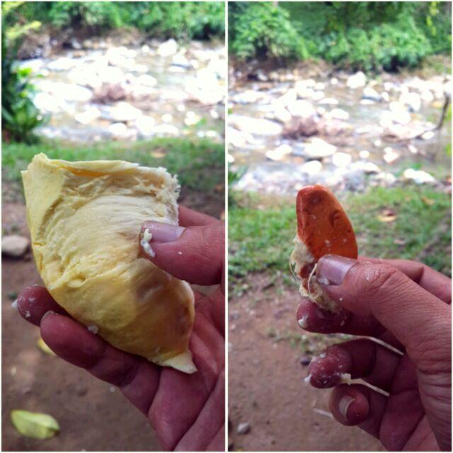 Ini dia si durian montong