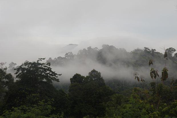 Hutan adat milik orang Punan Adiu