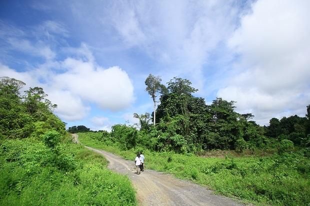 Hutan Kalimantan, paru-paru dunia