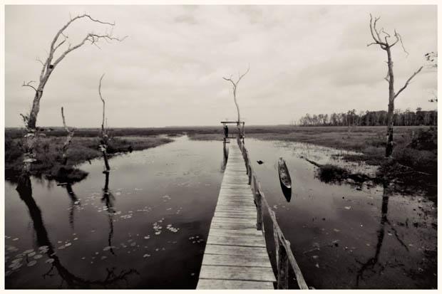 Dari rawa luas di tepian Rawa Biru inilah air bersih ditampung, diolah dan dialirkan ke kota Merauke melalui pipa sepanjang lebih dari 85 KM. Seperti umumnya rawa, di sini juga binatang buas seperti buaya hidup tenteram.