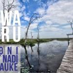 [PHOTO STORY] Rawa Biru, Ironi Urat Nadi Merauke