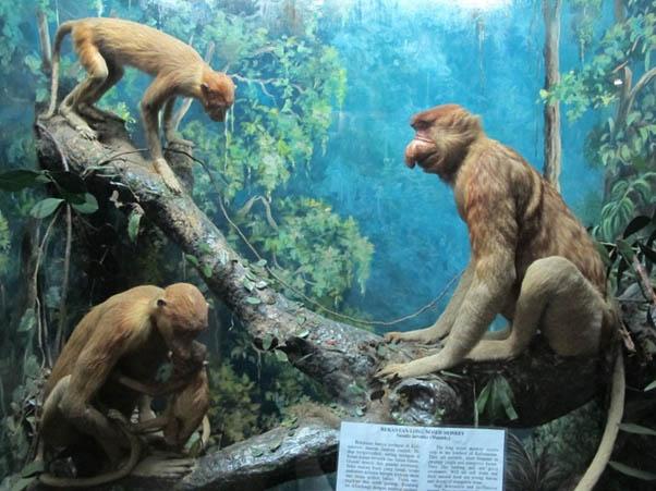 museum zoologi kebun raya bogor (sumber : hot.detik.com)