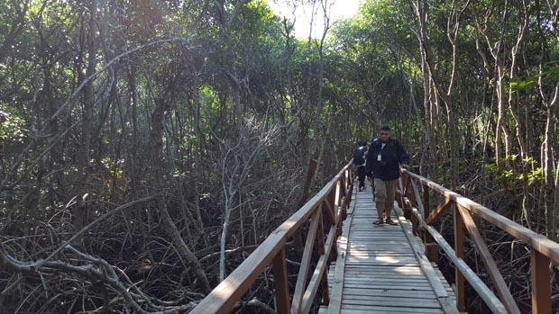 Mangrove di pulau Pannikiang, masih sehat dan lebat