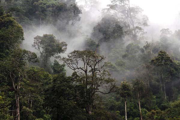 Kawasan Ekosistem Leuser Foto; Mongabay