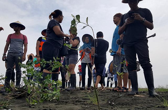 mangrove tapak